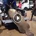 ชาวประมงจับปลาหมอยักษ์ได้ โดยไม่รู้ว่ามันกำลังท้องแก่! และนี้คือสิ่งที่เกิดขึ้น!? (ชมคลิป)