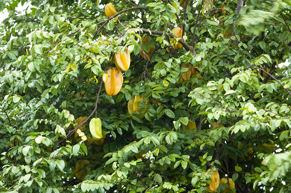 Image result for trees wild fruits