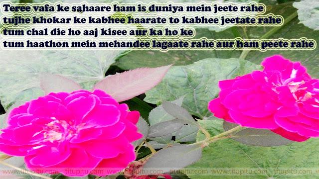 new hindi Shayari Shayari for all lovers