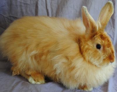 Jenis jenis Kelinci Yang Wajib Anda Tahu