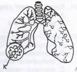 bagian alat pernapasan manusia