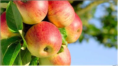 gambar apel segar