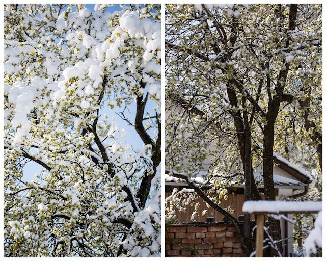 Garten Ende April