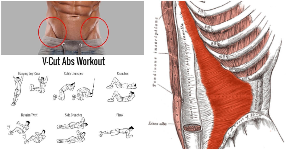 The V-Shaped Definition With The Right Workout - Fitness Tips Lovers