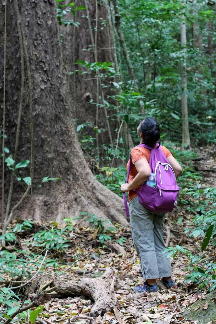 Forest in Bataan