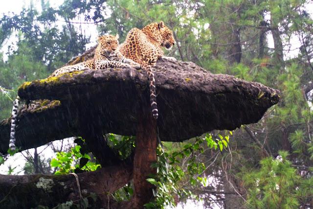 Koleksi hewan di Kebun Binatang Prigen, Pasuruan