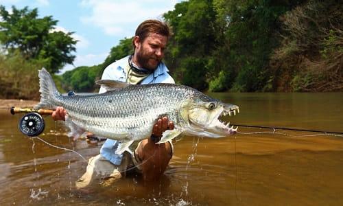 Spesies Ikan Paling Bahaya Di Dunia