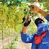 Sindicato dos Produtores Rurais oferece curso gratuito para encarregado de campo em Petrolina, PE