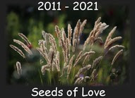 SEEDS OF LOVE 2021