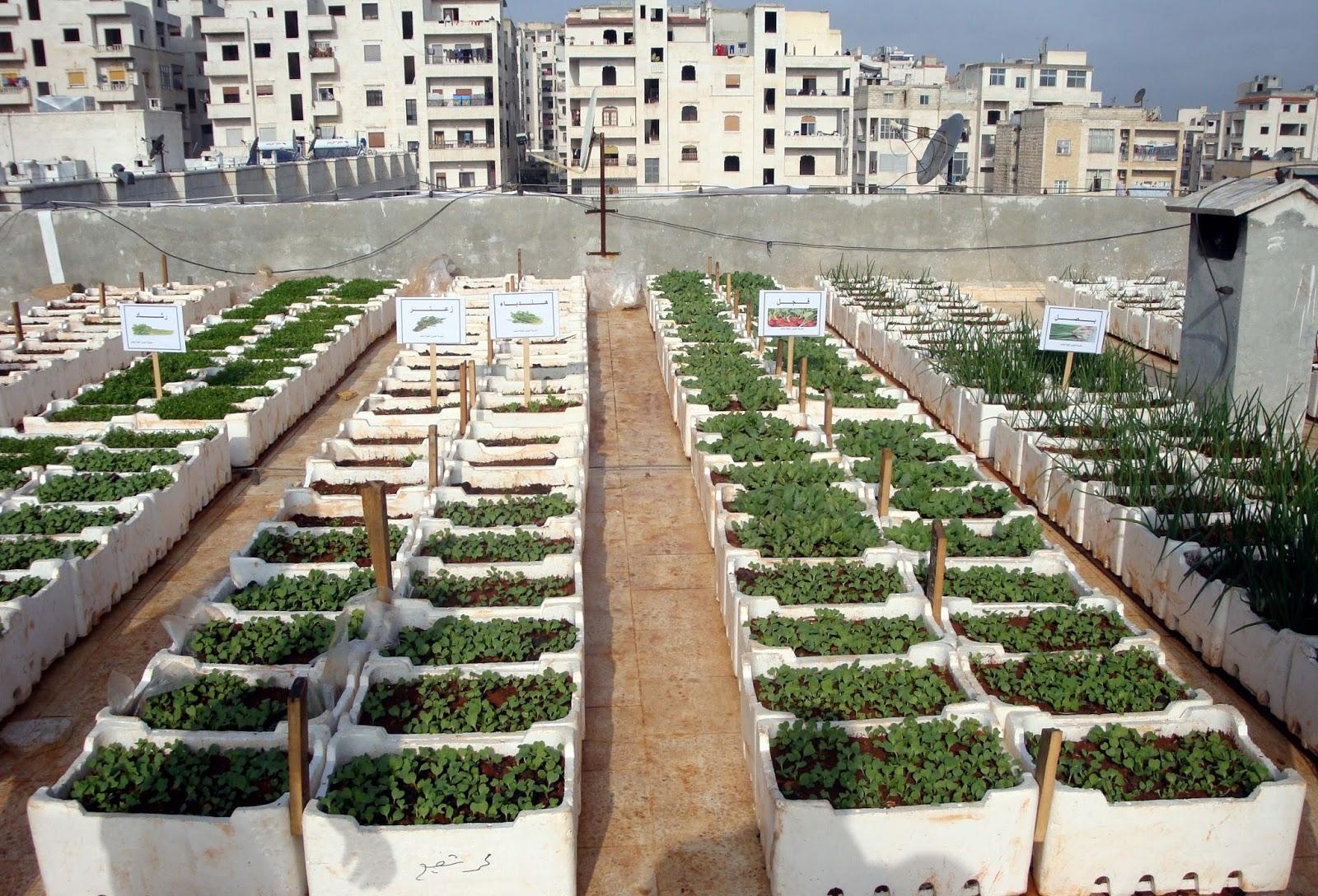 دراسة جدوى فكرة مشروع زراعة الأسطح بتكاليف بسيطة فى مصر 2020