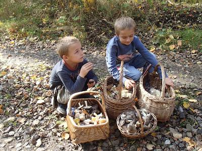 grzyby 2017, grzyby w październiku, gąski, jadalne gąski, niejadalne gąski, rozpoznawanie gąsek
