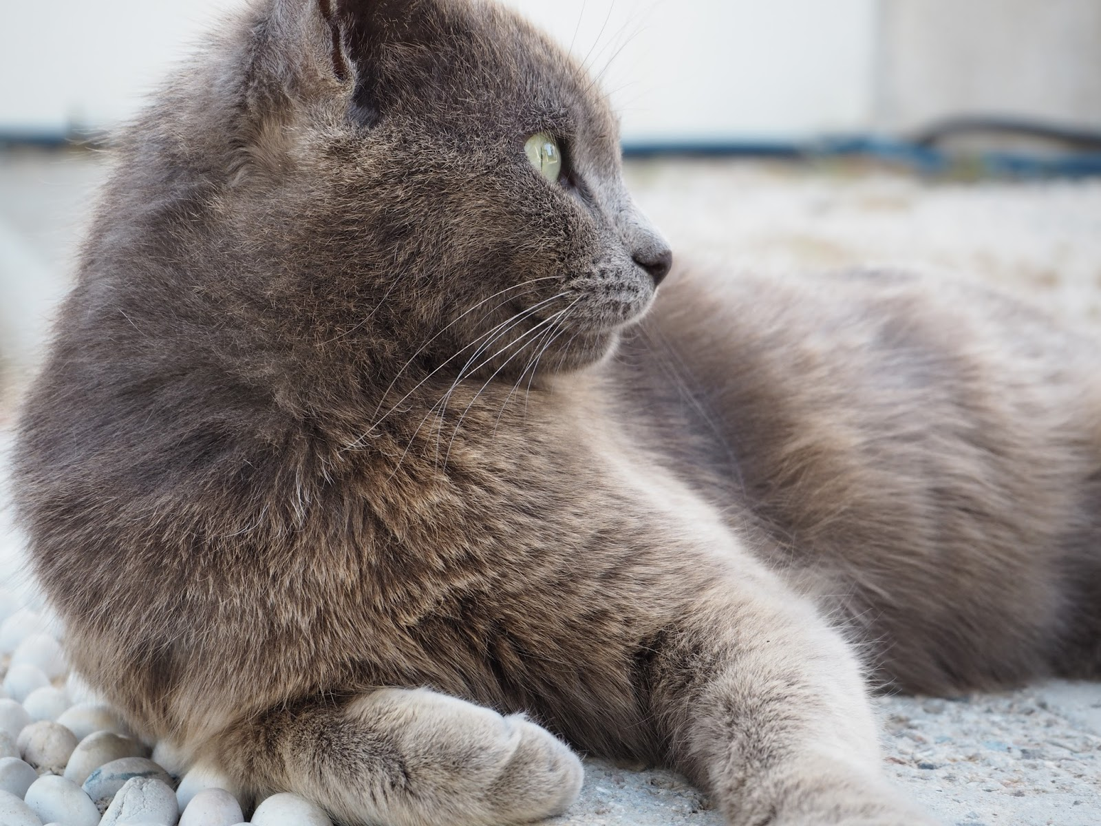 kissa rodoksella