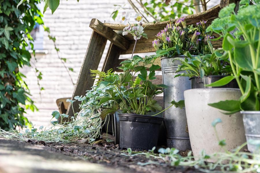fim.works | Fotografie.Leben.Wohnen. | Der Pflanztisch, eine meiner viele Gartenecken
