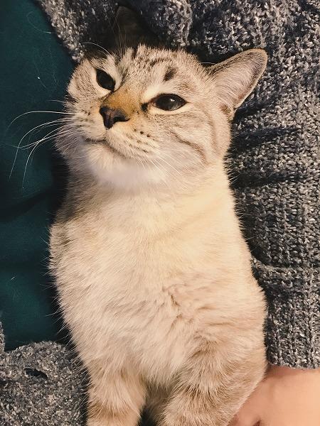 満足気な表情の猫