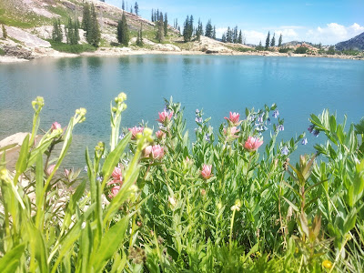 Cecret Lake Alta Utah by Albion Basion