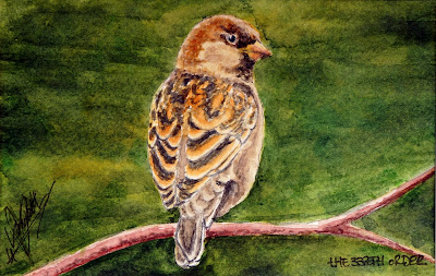 ACEO (Small Art) Sparrow by Elizabeth Casua, tHE 33ZTH oRDER - Watercolour artwork