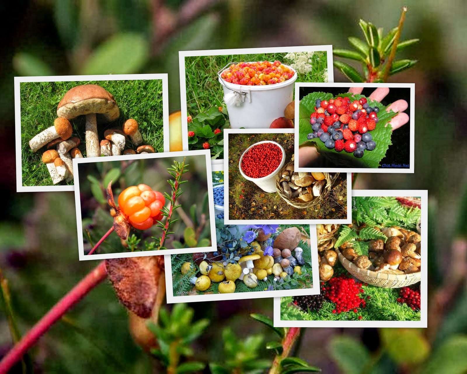 Картинка грибы ягоды для детей