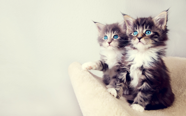 Windows 8 Cats Wallpapers