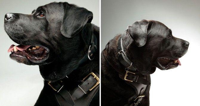 fotografia de cachorro