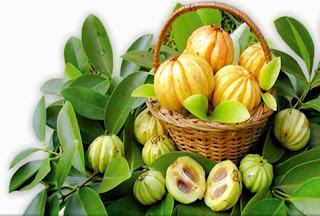 Một hình ảnh khác về quả bứa- garcinia cambogia