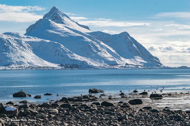 Lofoten, aves marinas y montañas, por El Guisante Verde Project