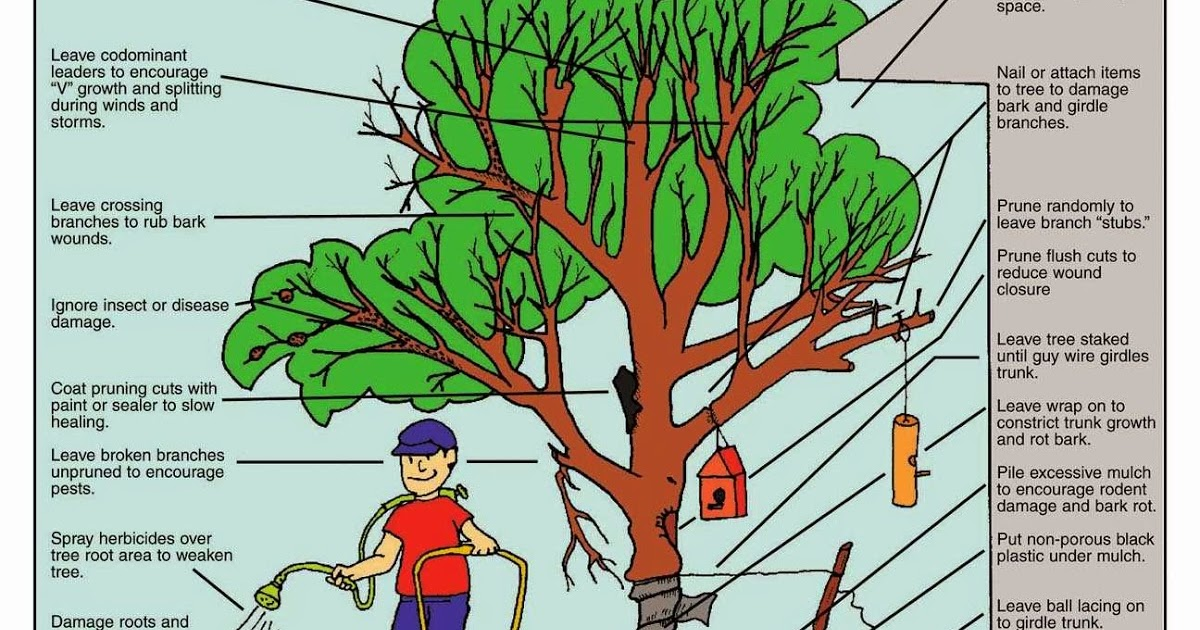 Garden And Farms How To Kill A Tree