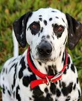 صور كلاب 2017 صور كلب صوركلاب مختلفة الانواع