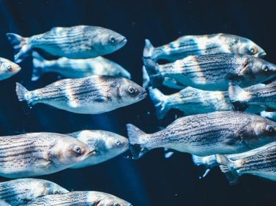 L'inspiration du dimanche #134 underwater fish