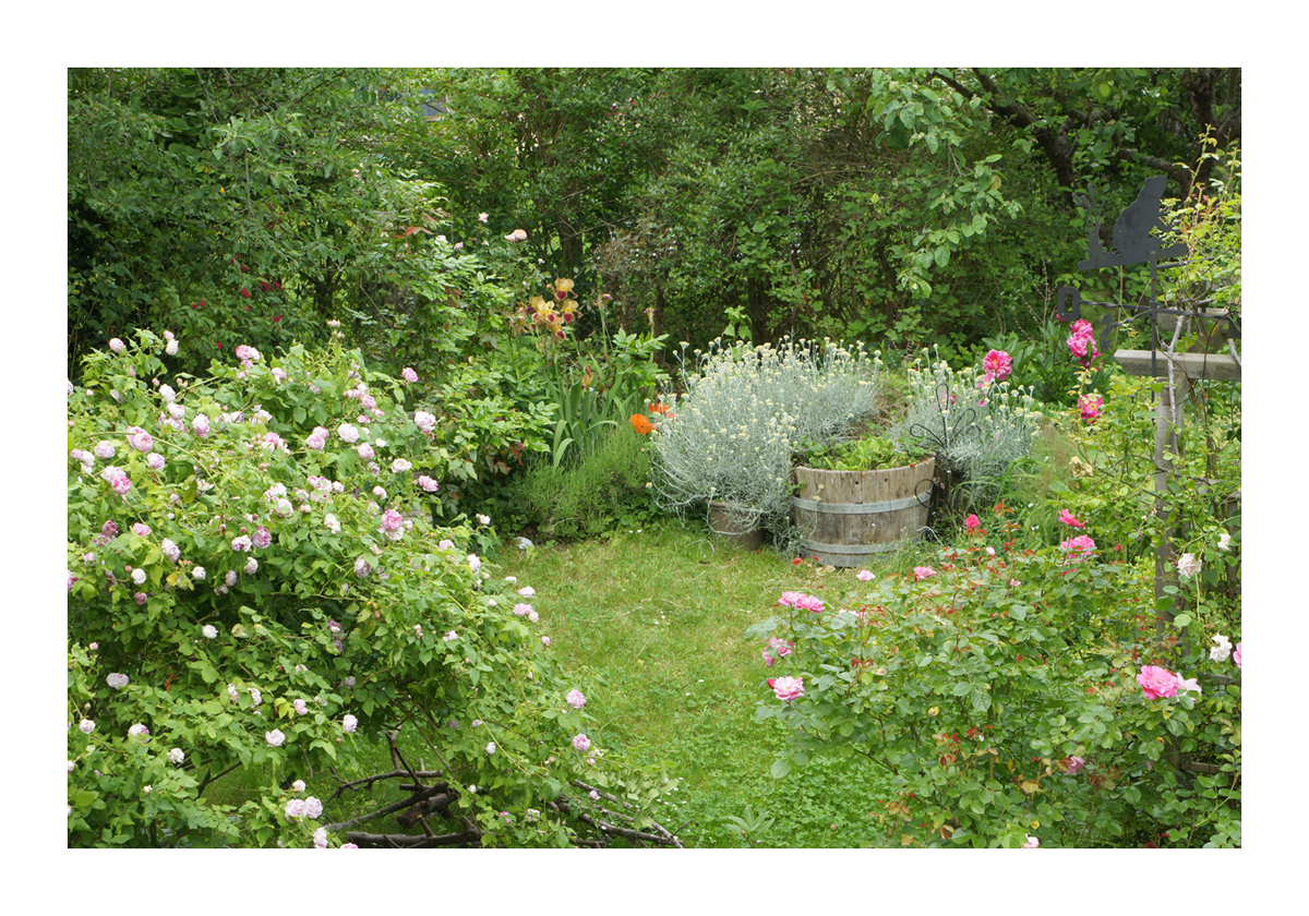 Jardin de marguerite le petit jardin the small garden for Le petit jardin karaoke