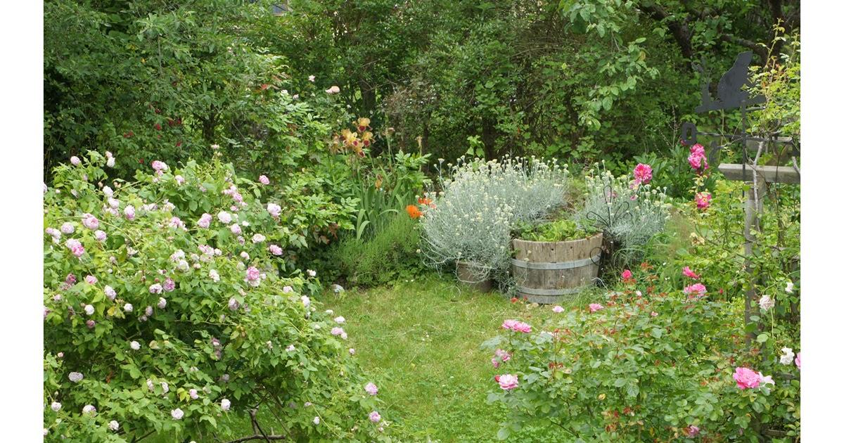 Jardin de marguerite le petit jardin the small garden for Jardin 0 l4anglaise