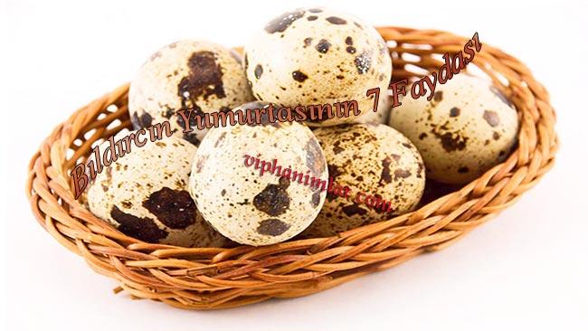 Bıldırcın Yumurtasının 7 Faydası - viphanimlar.com