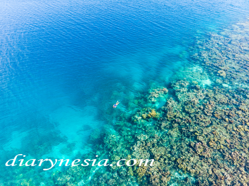 The Best Tourist Attractions You Must Visit at Wakatobi