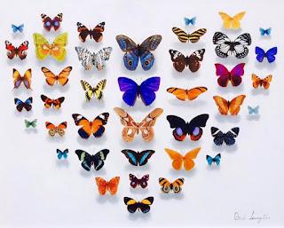 coloridas-naturalezas-muertas-mariposas