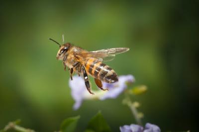 Πωλείται μέλι ανθέων στην Χαλκιδική