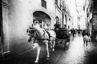http://fineartfotografie.blogspot.de/2016/12/horse-carriage-impressionist-street.html