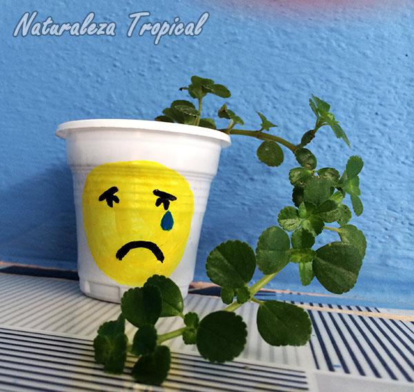 Maceta con emoji triste con planta colgante