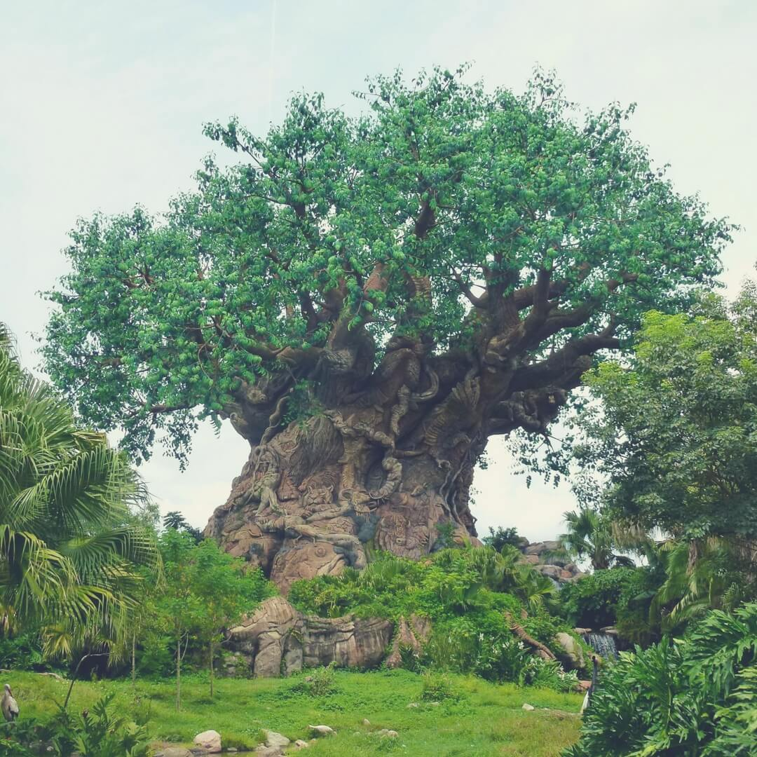 "A photo of the Tree of Life, at Animal Kingdom, Walt Disney World. Other trees cover the bottom, but you can clearly see a tiger's head carved into the bark of the Tree of Life as well as a beetle, a rhino, a lizard, and many other animals. Image for ""How to get a much-needed rest at Animal Kingdom""."