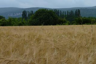 Paisaje de camino al río Ardèche.