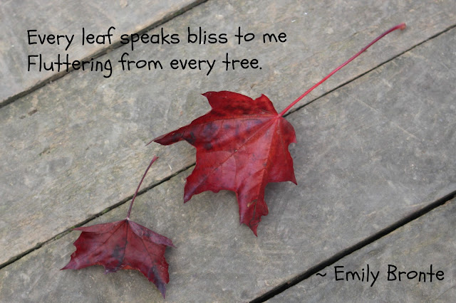 Fallen leaves at West Green House, autumn 2015 and poem extract from Fall, leaves, fall by Emily Bronte
