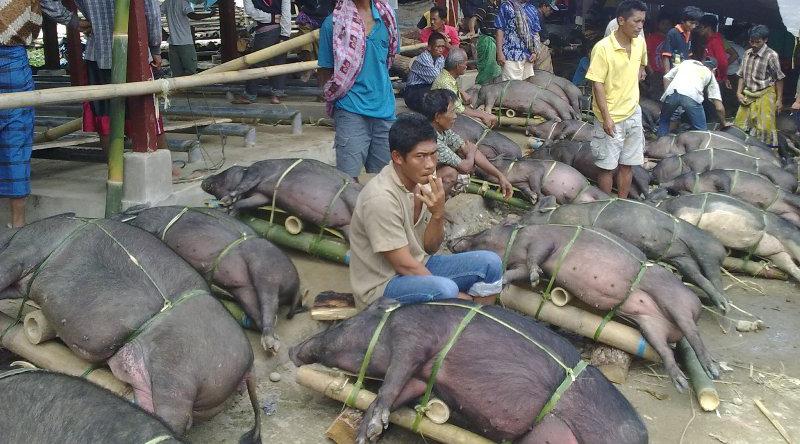 celeng Pasar Makale di Toraja