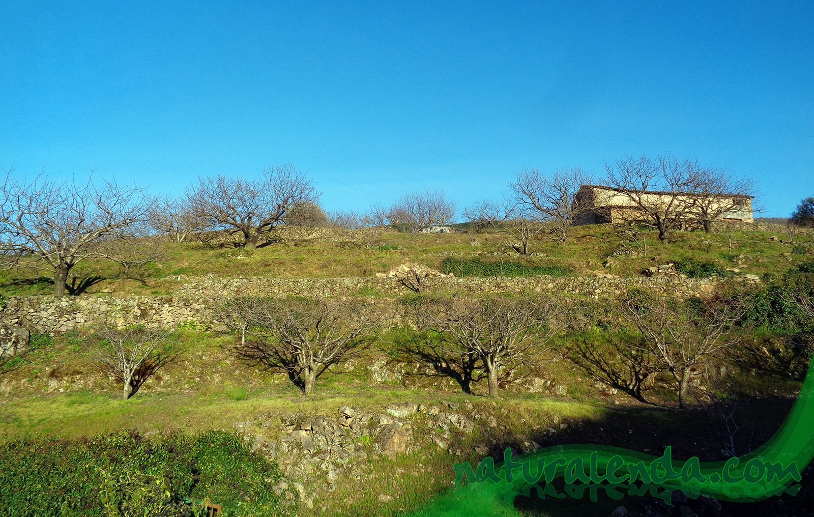 terrazas del valle del Jerte