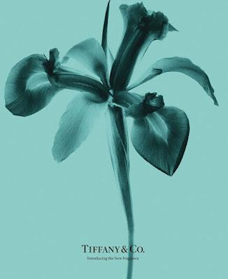 Irys - flagowa nuta perfum Tiffany