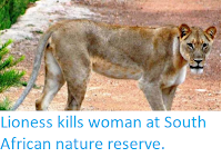 http://sciencythoughts.blogspot.co.uk/2018/03/lioness-kills-woman-at-south-african.html