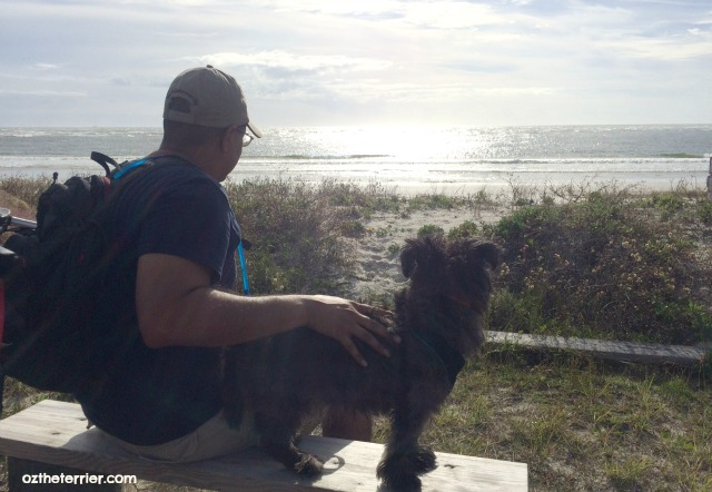 Oz the Terrier enjoys the beach view at Little Talbot State Park in Jacksonville, FL
