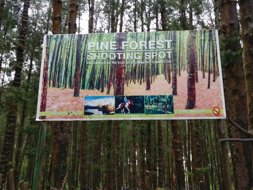Tamilnadu Tourism: Pine Forest Shooting Spot, Ooty, Nilgiris