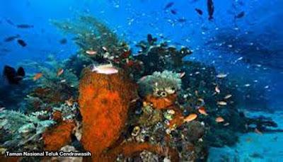 Taman Nasional Teluk Cendrawasih, Papua