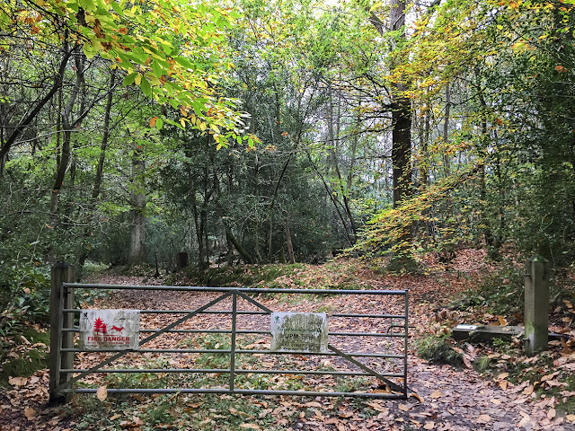 Gate into the woods.  Ashdown, 15 October 2017.