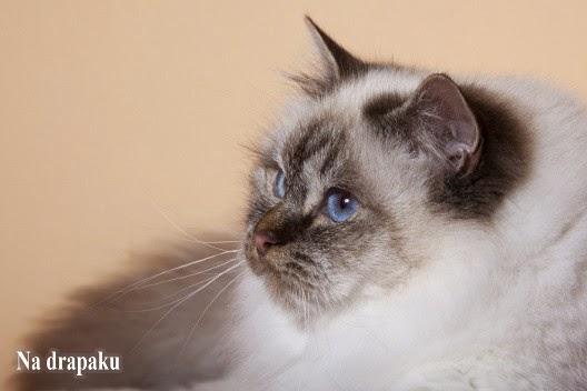 Syndrom urologiczny kotów