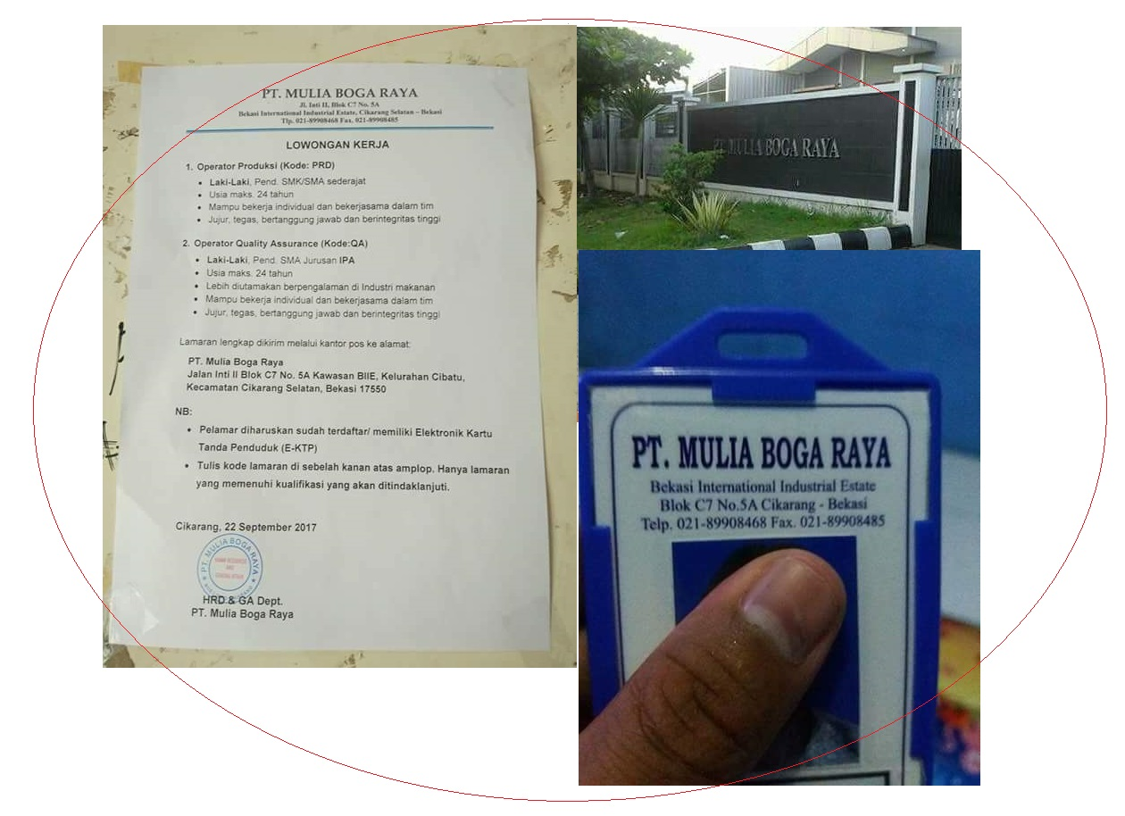 Silahkan Simak Dengan Baik Info Loker  PT. Mulia Boga Raya (Produksi Keju Prochiz)