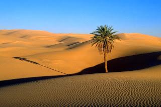 solitaria-palmera-en-el-desierto